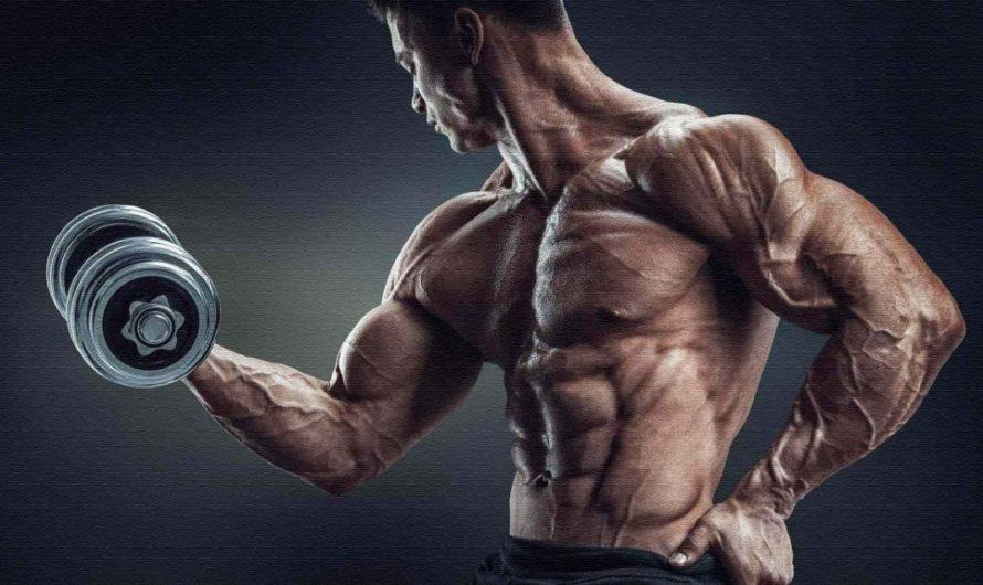 Как поставить мышечную массу — приоритет для туловища!