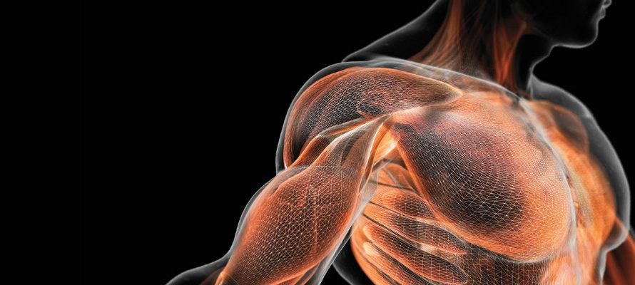Сила или масса важнее в составе тела?